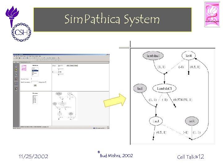 Sim. Pathica System 11/25/2002 ©Bud Mishra, 2002 Cell Talk» 12