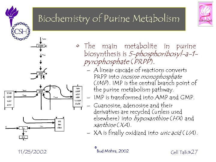 Biochemistry of Purine Metabolism • The main metabolite in purine biosynthesis is 5 -phosphoribosyl-a-1