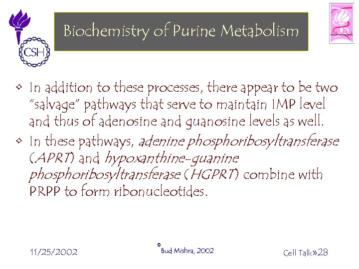 Biochemistry of Purine Metabolism • In addition to these processes, there appear to be