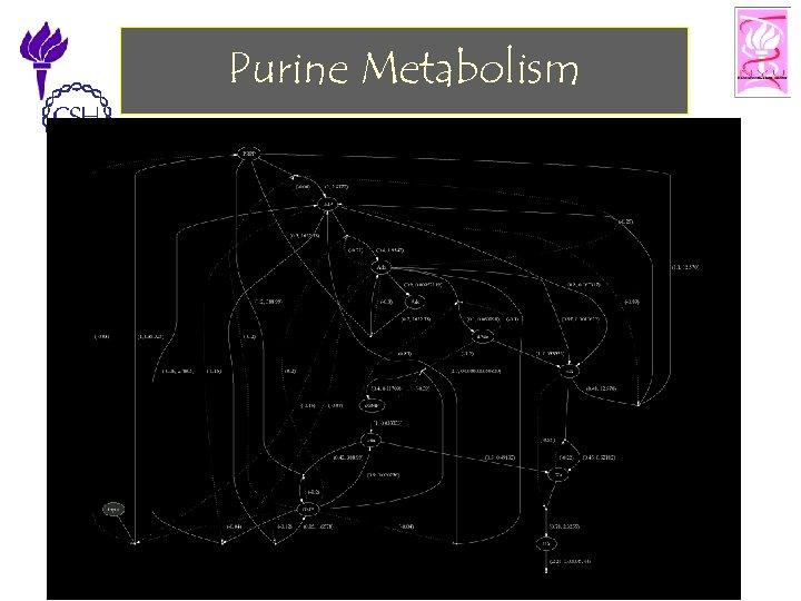 Purine Metabolism 11/25/2002 ©Bud Mishra, 2002 Cell Talk» 29