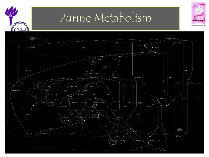 Purine Metabolism 11/25/2002 ©Bud Mishra, 2002 Cell Talk» 34