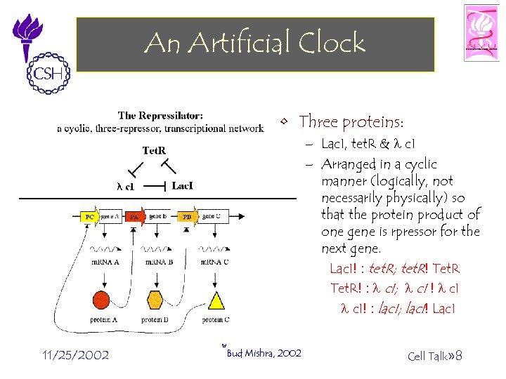 An Artificial Clock • Three proteins: – Lac. I, tet. R & l c.