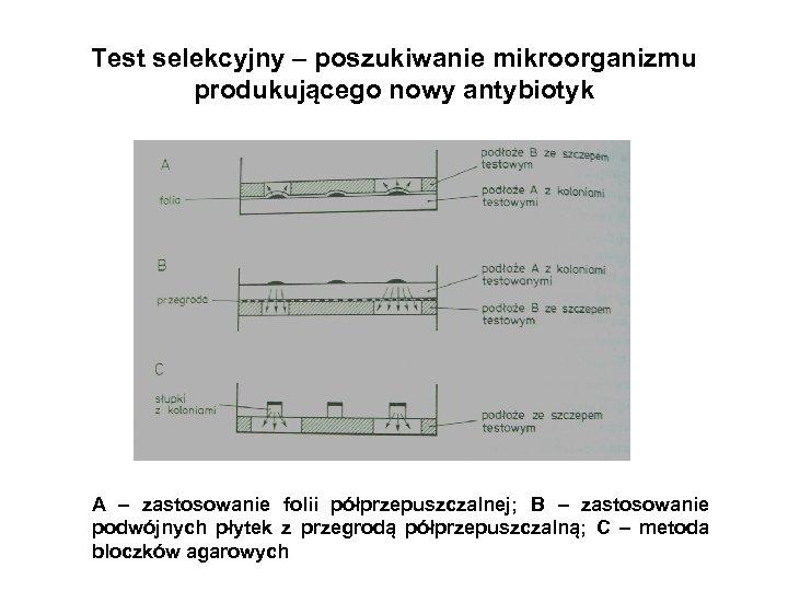 Test selekcyjny – poszukiwanie mikroorganizmu produkującego nowy antybiotyk A – zastosowanie folii półprzepuszczalnej; B