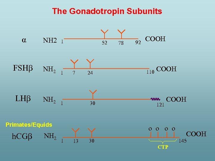 The Gonadotropin Subunits α NH 2 1 FSH NH 2 1 LH NH 2