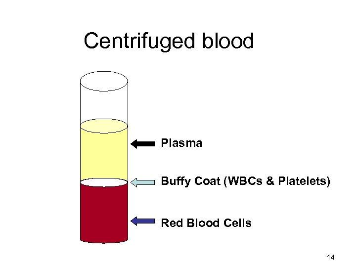 Centrifuged blood Plasma Buffy Coat (WBCs & Platelets) Red Blood Cells 14