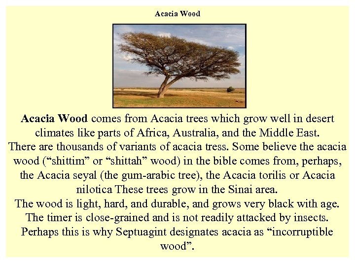 Acacia Wood Acacia Tree in the Negev Acacia Wood comes from Acacia trees which