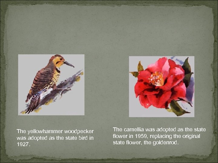 The yellowhammer woodpecker was adopted as the state bird in 1927. The camellia was