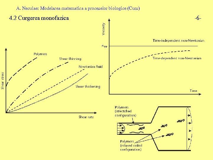A. Neculae: Modelarea matematica a proceselor biologice (Curs) 4. 2 Curgerea monofazica -6 -