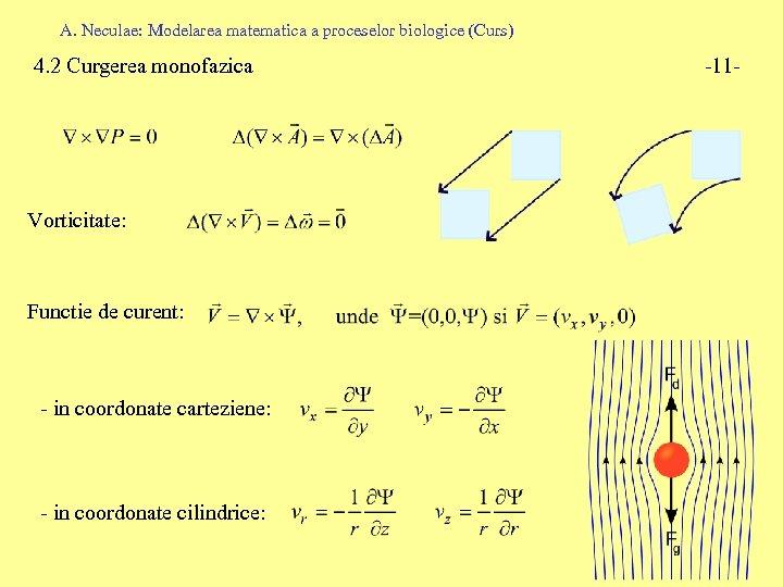 A. Neculae: Modelarea matematica a proceselor biologice (Curs) 4. 2 Curgerea monofazica Vorticitate: Functie