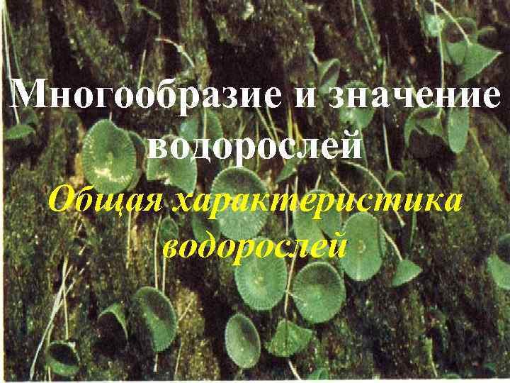 Многообразие и значение водорослей Общая характеристика водорослей