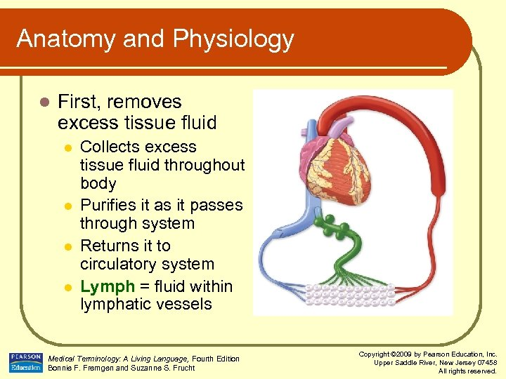Anatomy and Physiology l First, removes excess tissue fluid l l Collects excess tissue