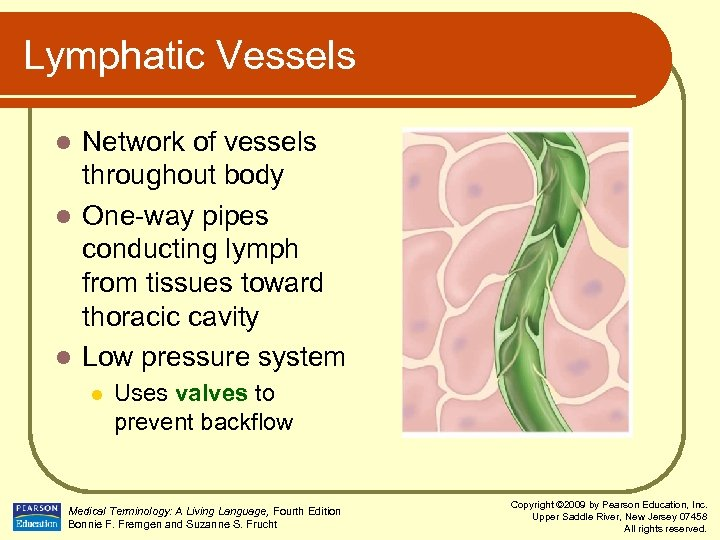 Lymphatic Vessels Network of vessels throughout body l One-way pipes conducting lymph from tissues