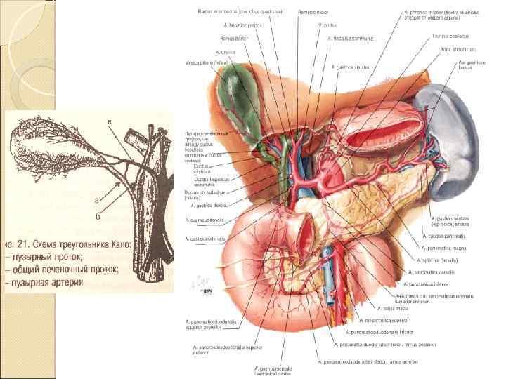 Антеградная и ретроградная холецистэктомия
