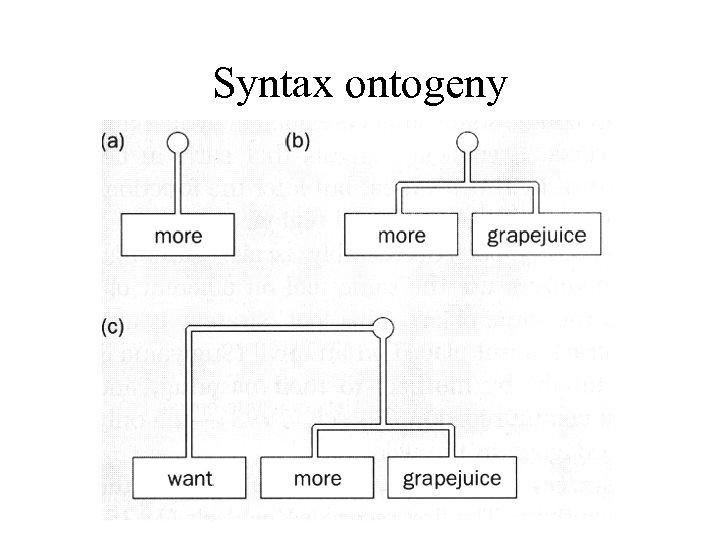 Syntax ontogeny