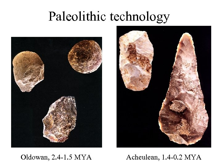 Paleolithic technology Oldowan, 2. 4 -1. 5 MYA Acheulean, 1. 4 -0. 2 MYA