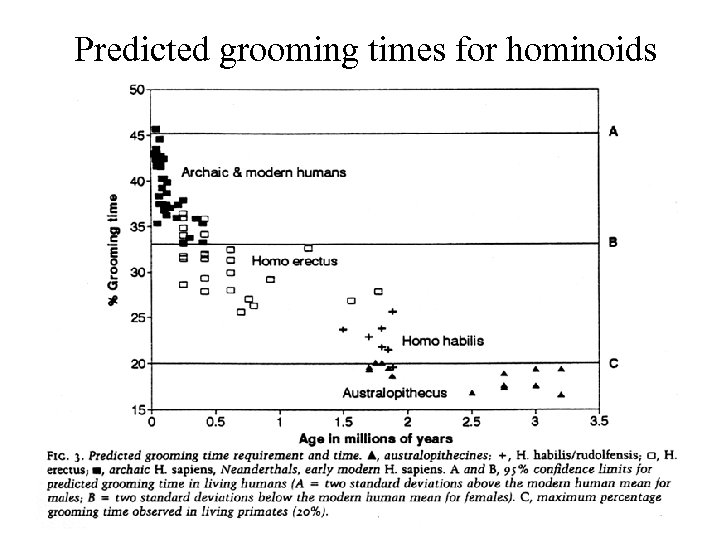 Predicted grooming times for hominoids