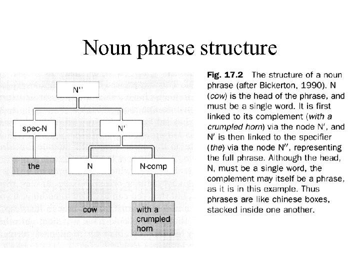 Noun phrase structure