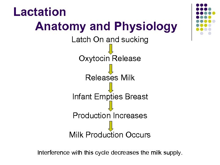 Lactation Anatomy and Physiology Latch On and sucking Oxytocin Releases Milk Infant Empties Breast