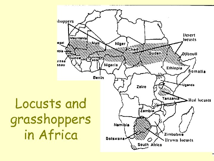 Locusts and grasshoppers in Africa