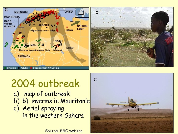 a b Nov. CYPRUS, EGYPT 2004 outbreak a) map of outbreak b) b) swarms