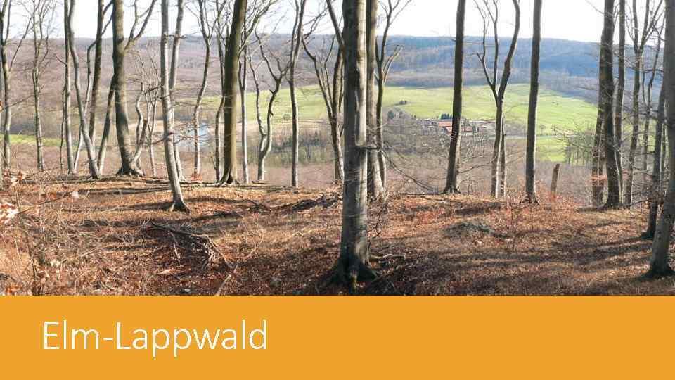 Elm-Lappwald