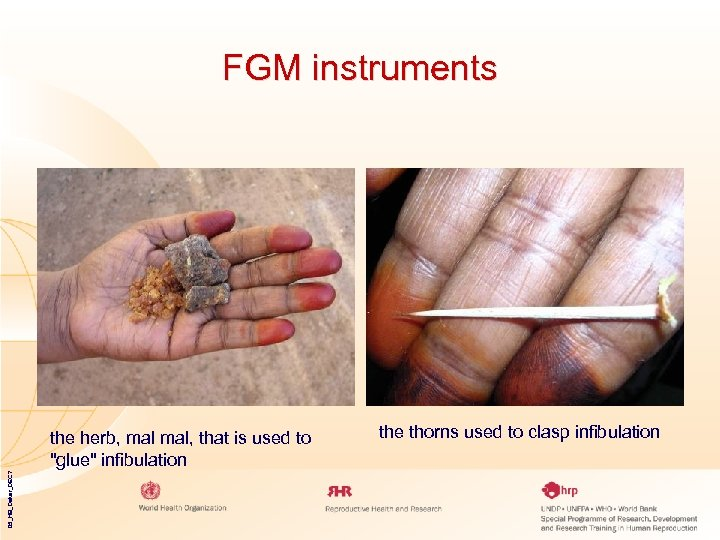 FGM instruments 05_HB_Dakar_DEC 7 the herb, mal, that is used to