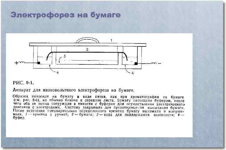 Электрофорез на бумаге