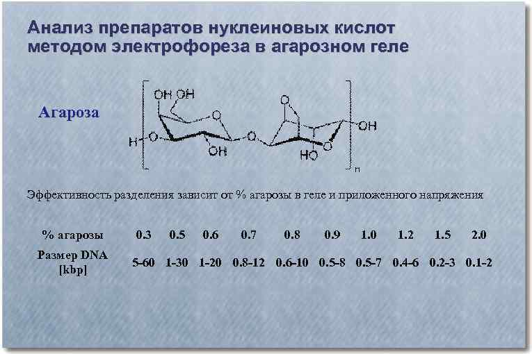 Анализ препаратов нуклеиновых кислот методом электрофореза в агарозном геле Агароза Эффективность разделения зависит от