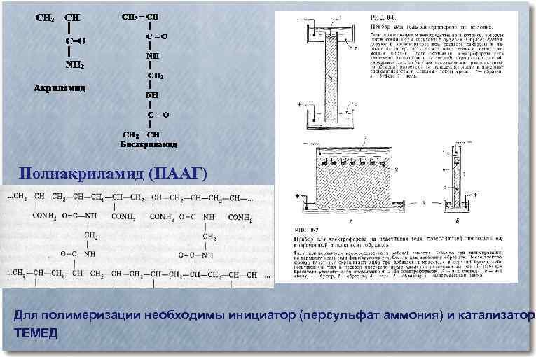 Полиакриламид (ПААГ) Для полимеризации необходимы инициатор (персульфат аммония) и катализатор ТЕМЕД