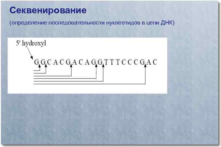 Секвенирование (определение последовательности нуклеотидов в цепи ДНК)