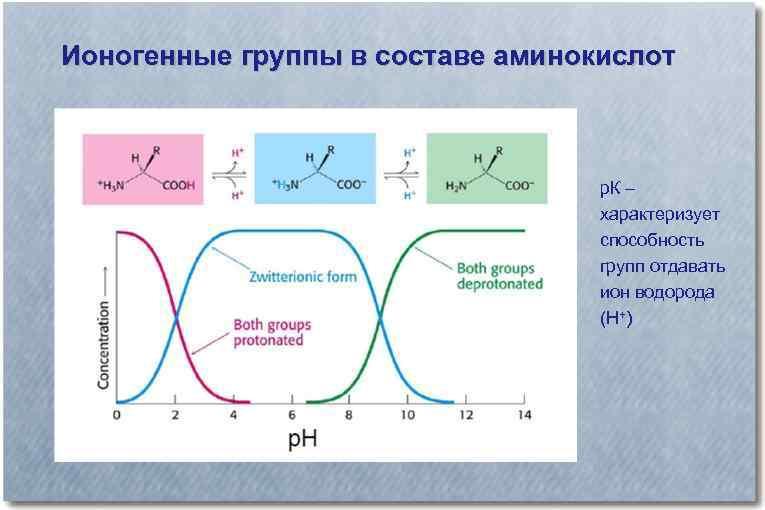 Ионогенные группы в составе аминокислот р. К – характеризует способность групп отдавать ион водорода