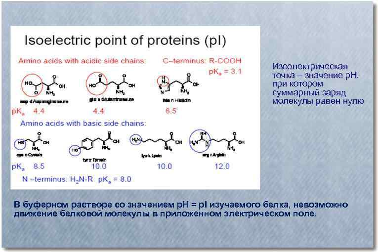 Изоэлектрическая точка – значение р. Н, при котором суммарный заряд молекулы равен нулю В