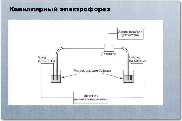 Капиллярный электрофорез