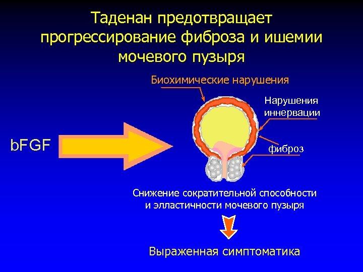Таденан предотвращает прогрессирование фиброза и ишемии мочевого пузыря Биохимические нарушения Нарушения иннервации b. FGF