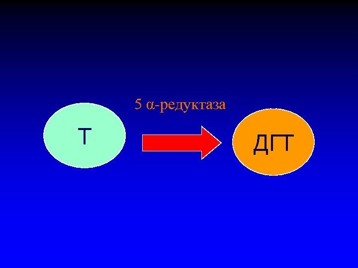 5 α-редуктаза Т ДГТ