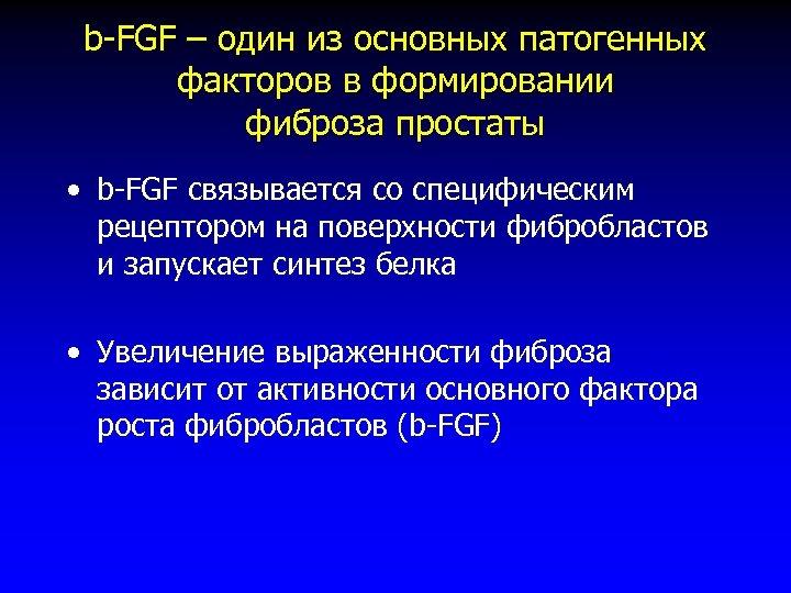 b-FGF – один из основных патогенных факторов в формировании фиброза простаты • b-FGF связывается