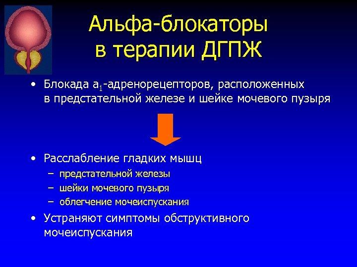 Альфа-блокаторы в терапии ДГПЖ • Блокада а 1 -адренорецепторов, расположенных в предстательной железе и