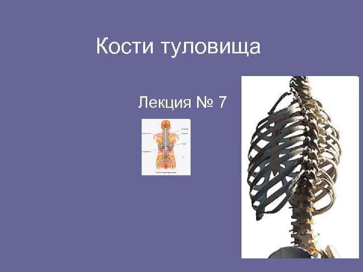 Кости туловища Лекция № 7