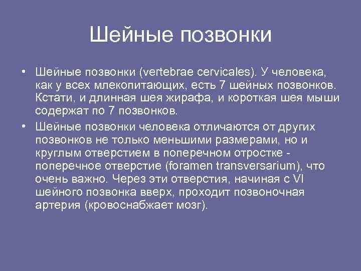 Шейные позвонки • Шейные позвонки (vertebrae cervicales). У человека, как у всех млекопитающих, есть