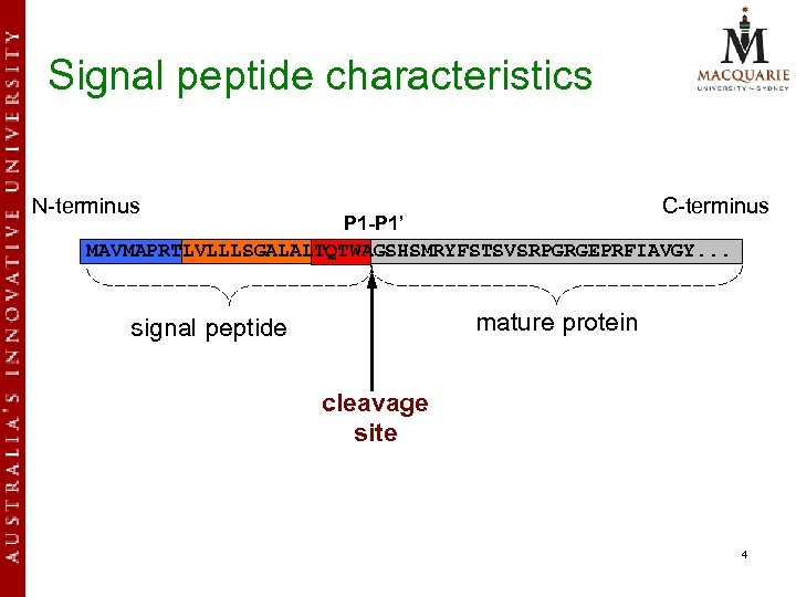 Signal peptide characteristics N-terminus C-terminus P 1 -P 1' MAVMAPRTLVLLLSGALALTQTWAGSHSMRYFSTSVSRPGRGEPRFIAVGY. . . mature protein