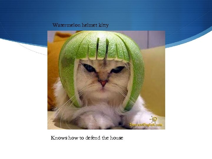 Watermelon helmet kitty Knows how to defend the house