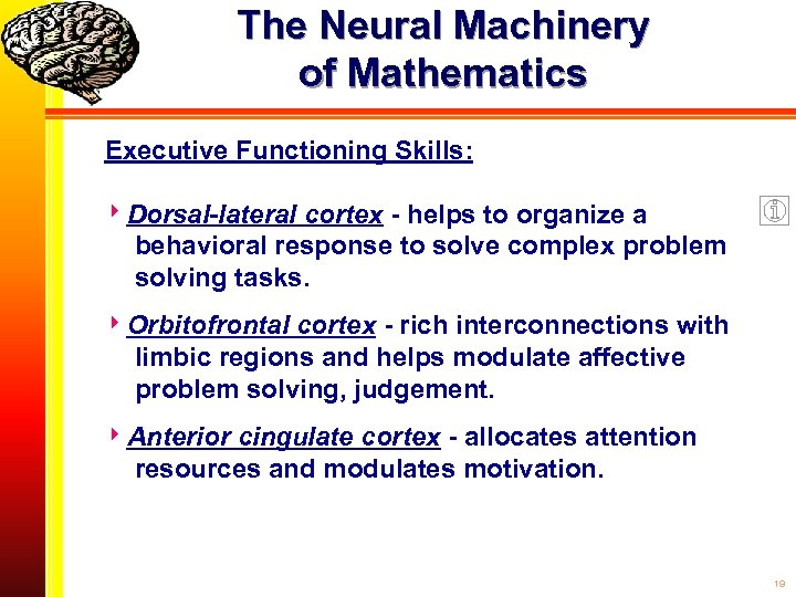 The Neural Machinery of Mathematics Executive Functioning Skills: Dorsal-lateral cortex - helps to organize