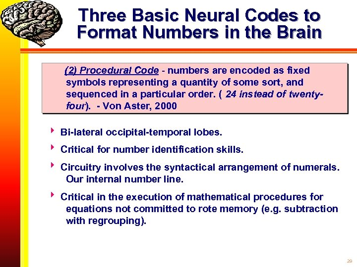 Three Basic Neural Codes to Format Numbers in the Brain (2) Procedural Code -