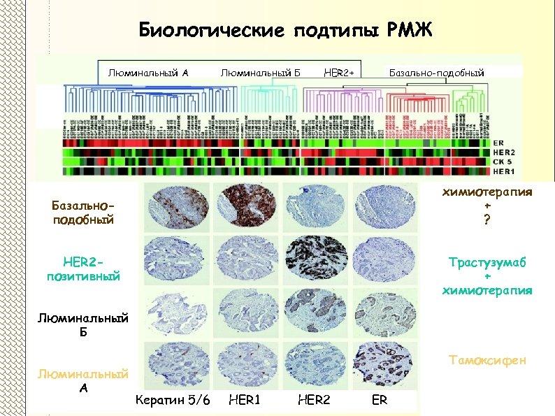 Биологические подтипы РМЖ Люминальный А Люминальный Б HER 2+ Базально-подобный химиотерапия + ? Базальноподобный
