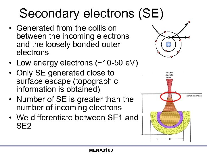 Secondary electrons (SE) • Generated from the collision between the incoming electrons and the
