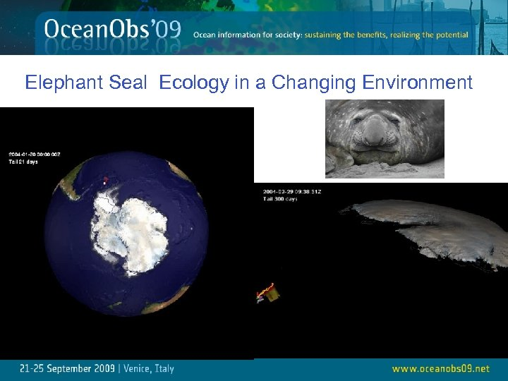 Elephant Seal Ecology in a Changing Environment 25