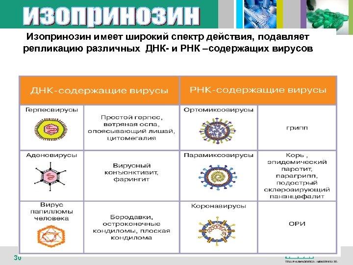 Изопринозин имеет широкий спектр действия, подавляет репликацию различных ДНК- и РНК –содержащих вирусов 30