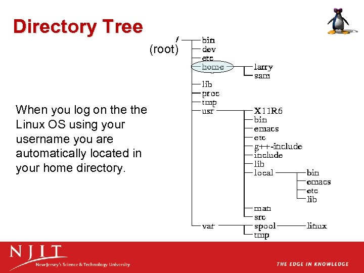 Directory Tree (root) When you log on the Linux OS using your username you