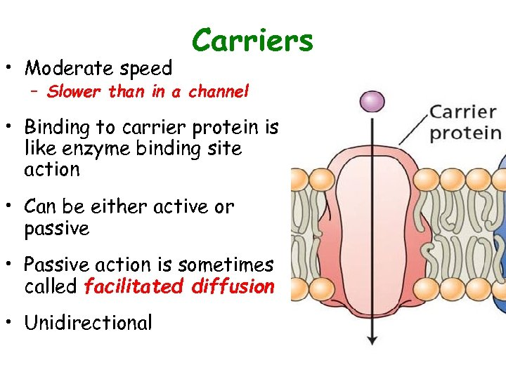 • Moderate speed Carriers – Slower than in a channel • Binding to
