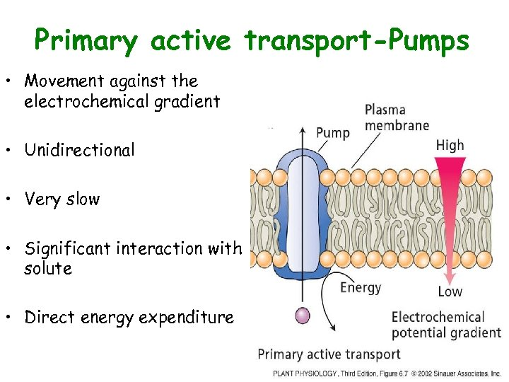 Primary active transport-Pumps • Movement against the electrochemical gradient • Unidirectional • Very slow